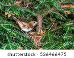 a common nightingale bird at... | Shutterstock . vector #536466475