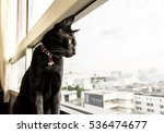 Black Cat Look Out Of The...