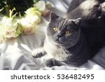 cat on the bed with flowers | Shutterstock . vector #536482495