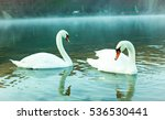 Two Swans In Swan Lake. Swan...