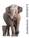 wild sri lankan elephant ... | Shutterstock . vector #536536171