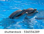 funny dolphins in the pool... | Shutterstock . vector #536556289