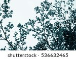 image of trees in  garden with... | Shutterstock . vector #536632465