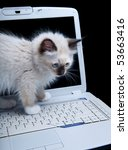 Stock photo seal point mitted ragdoll kitten on a laptop computer 53663416