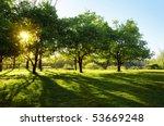 sun shining through trees on a... | Shutterstock . vector #53669248