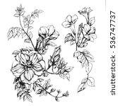 set of drawings blossom garnet | Shutterstock . vector #536747737
