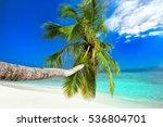 Palm Tree On Tropical Island...