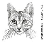 head of a small cat | Shutterstock . vector #536842711