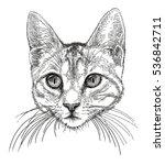 head of a small cat | Shutterstock . vector #536842711