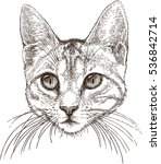 head of a small cat | Shutterstock .eps vector #536842714