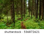 Path In Spruce Forest Of Karelia