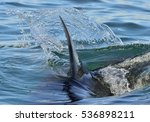 shark fin above water. closeup... | Shutterstock . vector #536898211