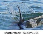 shark fin above water. closeup... | Shutterstock . vector #536898211