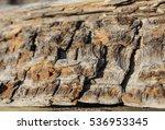bark | Shutterstock . vector #536953345
