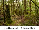 detail of heavily moss covered... | Shutterstock . vector #536968099
