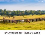 Stock photo horses at horse farm at golden hour country summer landscape 536991355