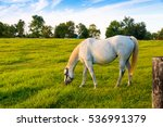 white horse at green pastures...   Shutterstock . vector #536991379