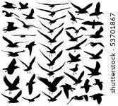 seagulls vector | Shutterstock .eps vector #53701867