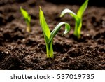concept appearance of life  ... | Shutterstock . vector #537019735