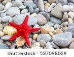 Starfish On The Coast