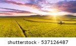 Combine Harvests Ripe Rice In...