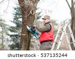 Lumberjack Cutting A Branch...