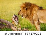 Portrait Of Roaring Lion And...