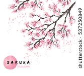 sakura japan cherry branch with ... | Shutterstock .eps vector #537250849
