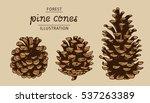 Pine Cones Vector Set ...