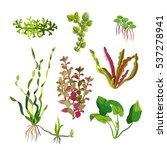 Aquarium Plants Set. Cartoon...