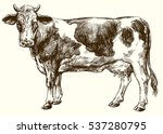 cow isolated on white  hand...   Shutterstock .eps vector #537280795