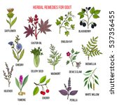 collection of natural herbs for ... | Shutterstock .eps vector #537356455