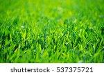 green grass texture from a field | Shutterstock . vector #537375721