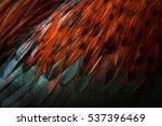 Chicken Fur Pattern Background...