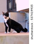 black and white cat in the yard | Shutterstock . vector #537419935