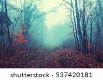 magical foggy seasonal forest... | Shutterstock . vector #537420181