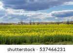 Small photo of Vivid yellow canola blossom in Spring taken on farmland near the village of Abridge in Essex, England.
