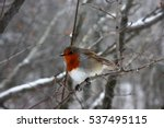 Bird Robin Winter