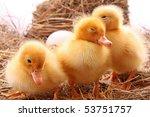 Three Duckling In Hay