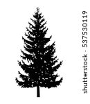 silhouette of pine tree. can be ... | Shutterstock .eps vector #537530119