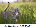 Stock photo little kitten hiding in deep grass 53753692