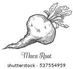 maca peruvian superfood plant.... | Shutterstock . vector #537554959