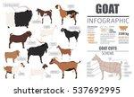 goat breeds infographic... | Shutterstock .eps vector #537692995