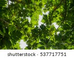 green  leaf | Shutterstock . vector #537717751