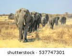 A Herd Of African Elephants...