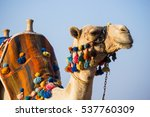 the muzzle of the african camel ... | Shutterstock . vector #537760309