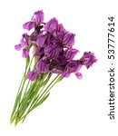 flowers irises  on a white... | Shutterstock . vector #53777614