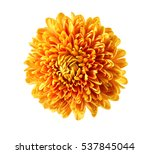 Beautiful Orange Chrysanthemum...