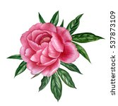 pink peony in watercolor style. ...   Shutterstock . vector #537873109
