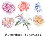 set with flowers. rose. blossom....   Shutterstock . vector #537891661